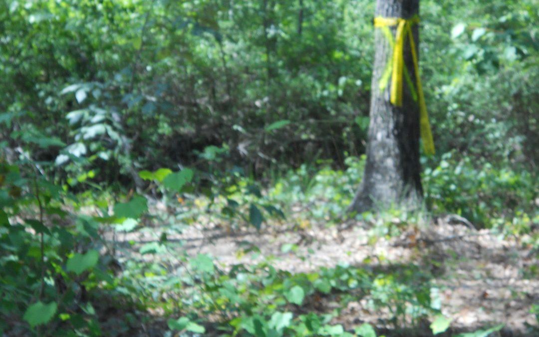 Murder of Ashton Deon Randle